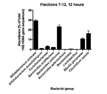 13C Inulin in bacteria