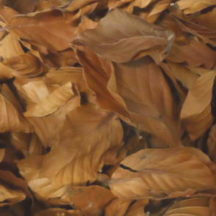13C/15N Beech leaf